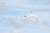 Jagdflieger-Rotte im Anflug